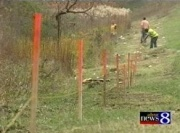 Turtle fence along US 31.  (Source: WoodTV)